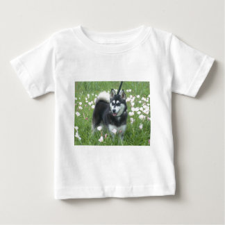 Alaskan Klee Kai Dog Plays In The Tulips Baby T-Shirt