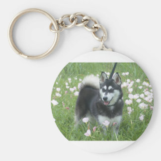 Alaskan Klee Kai Dog Plays In The Tulips Basic Round Button Keychain
