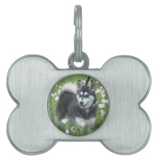 Alaskan Klee Kai Dog Plays In The Tulips Pet Tag