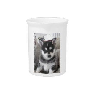 Alaskan Klee Kai Puppy Dog Drink Pitchers