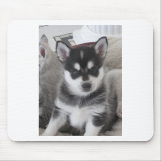 Alaskan Klee Kai Puppy Dog Mouse Pad