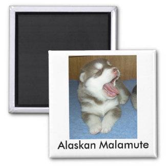 Alaskan Malamute, Alaskan Malamute Magnet
