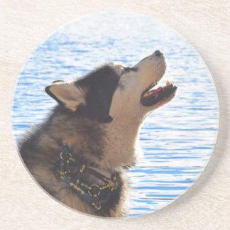 Alaskan Malamute Coaster