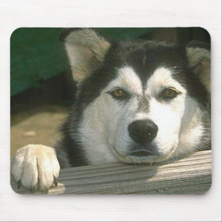 Alaskan Malamute - Customized Mouse Pad