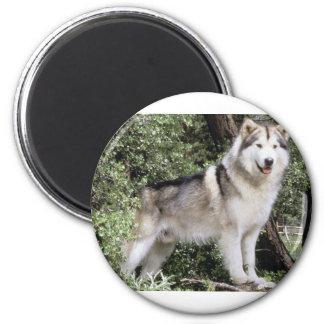 Alaskan Malamute Dog 2 Inch Round Magnet