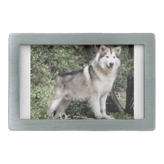 Alaskan Malamute Dog Belt Buckles