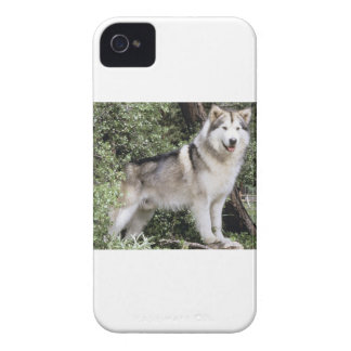 Alaskan Malamute Dog iPhone 4 Case