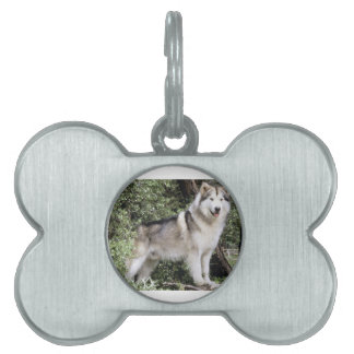 Alaskan Malamute Dog Pet Tags