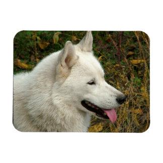 Alaskan Malamute Dog Photograph Rectangular Photo Magnet