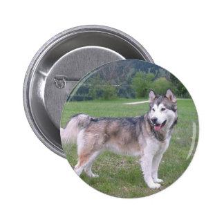Alaskan Malamute Dog Round Button