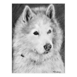 Alaskan Malamute Drawing Postcard