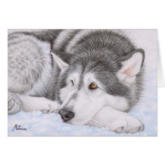 Alaskan Malamute in snow Card