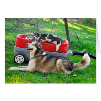 Alaskan Malamute Mothers Day Card