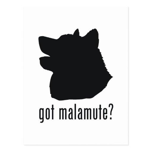 Alaskan Malamute Post Card
