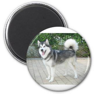 Alaskan Malamute Puppy Dog 2 Inch Round Magnet