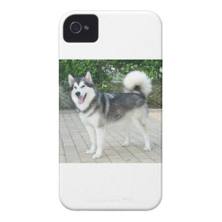 Alaskan Malamute Puppy Dog iPhone 4 Case-Mate Cases