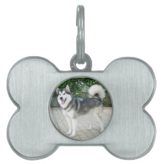 Alaskan Malamute Puppy Dog Pet ID Tag