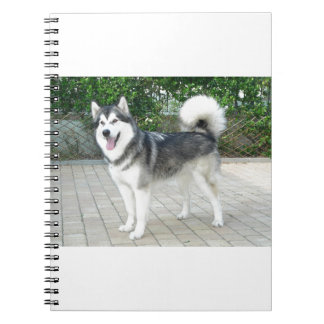 Alaskan Malamute Puppy Dog Spiral Notebooks