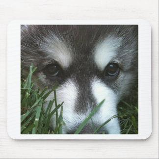 Alaskan Malamute Puppy Mouse Pad