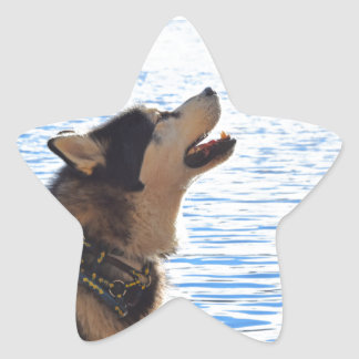 Alaskan Malamute Star Sticker
