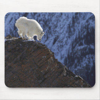 Alaskan Mountain Ram Mouse Pad