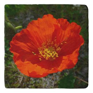 Alaskan Red Poppy Colorful Flower Trivet