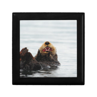 Alaskan Sea Otter Gift Box