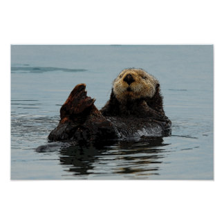 Alaskan Sea Otter Poster