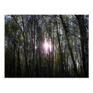 Alaskan Sun Postcard