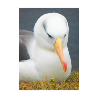 Albatross Bird off the coast of New Zealand Canvas Print