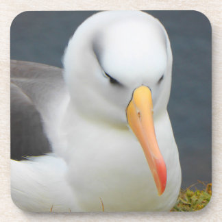 Albatross Bird off the coast of New Zealand Coaster