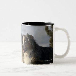 Alberta, Canada 2 Two-Tone Coffee Mug