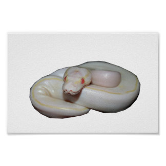 Albino Ivory Poster