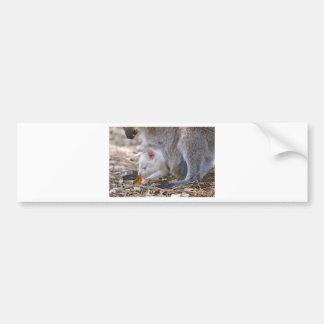 Albino joey in the pocket bumper sticker