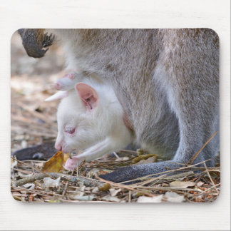 Albino joey in the pocket mouse pad