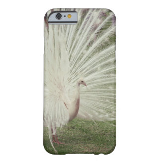 Albino peacock barely there iPhone 6 case