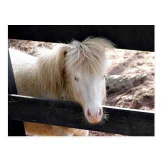 Albino pony postcard