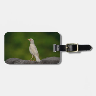 Albino Robin in Crown Point Luggage Tag