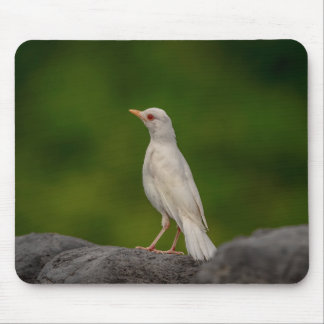 Albino Robin in Crown Point Mouse Pad