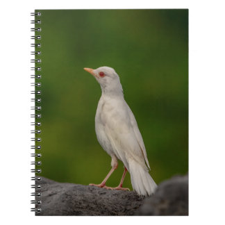Albino Robin in Crown Point Notebook