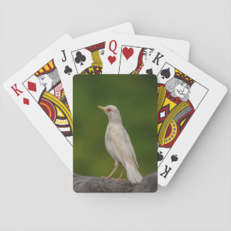 Albino Robin in Crown Point Playing Cards