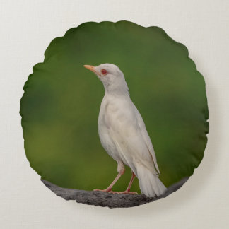 Albino Robin in Crown Point Round Pillow