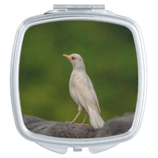 Albino Robin in Crown Point Travel Mirror