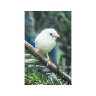 Albino Sparrow Canvas Print