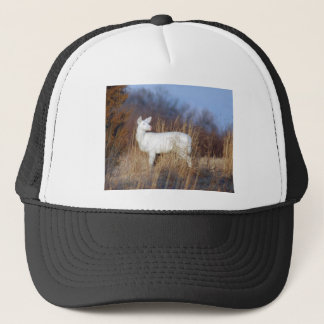 albino trucker hat