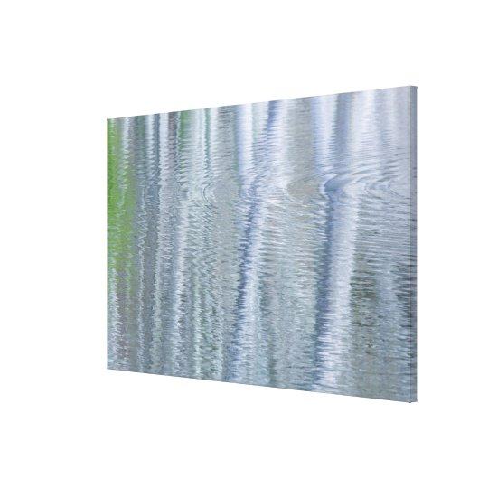 Alder Trees   Bainbridge Island, WA Canvas Print