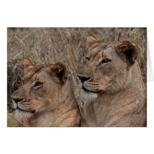 Alert Lionesses Card