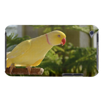 Alert Lutino Indian Ringneck iPod Case-Mate Cases