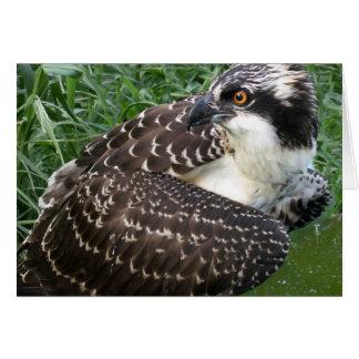 Alert Osprey Card