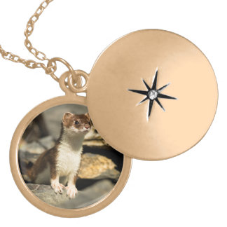 Alert Weasel Gold Plated Necklace